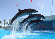 『名古屋港水族館』入館券付きプラン